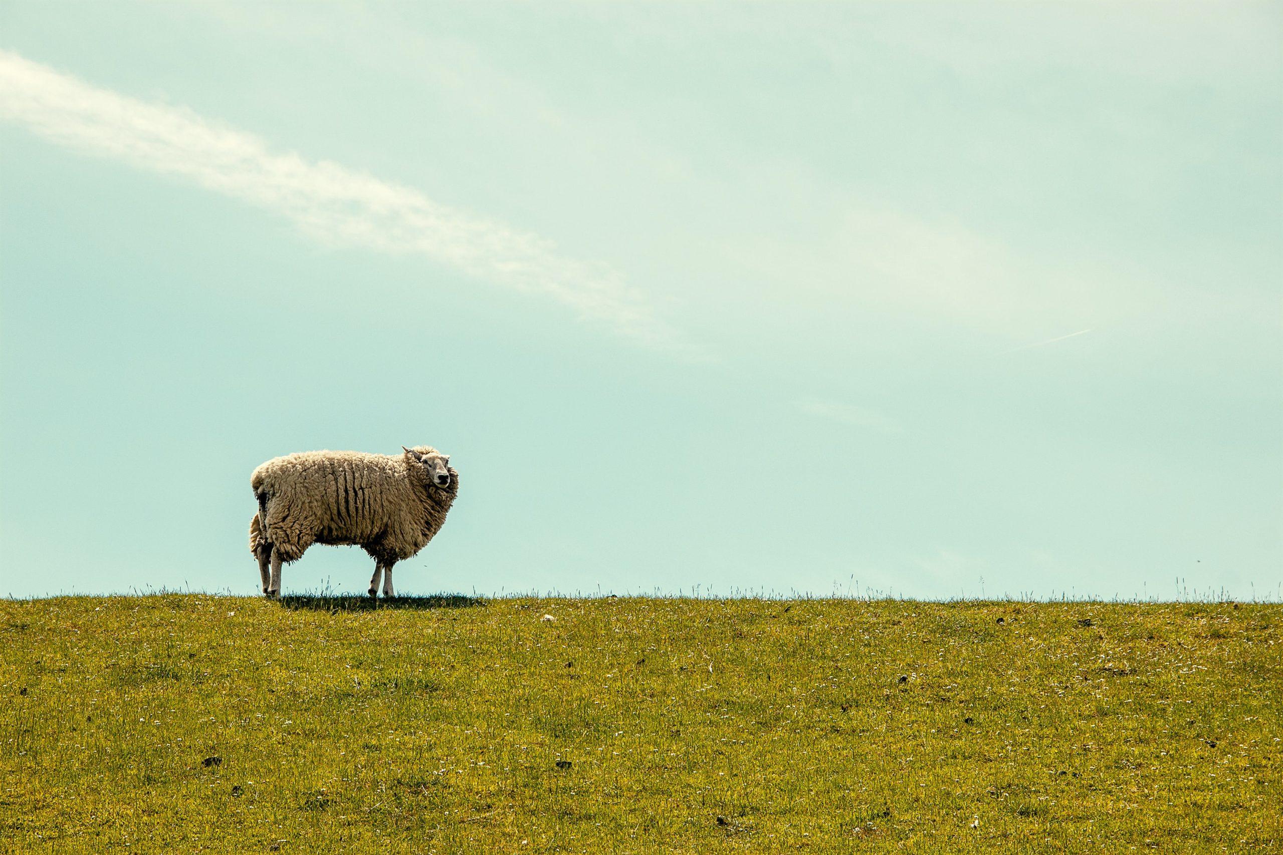 迷える子羊がコーチングを受けて感じたこと